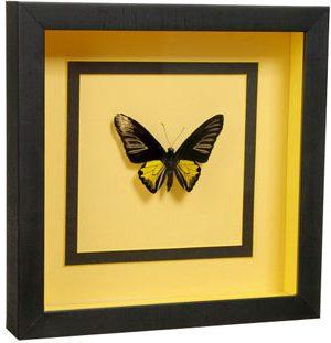 бабочка аквариум глубокое оформление